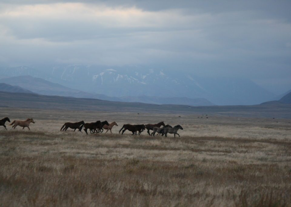 Horses KZ